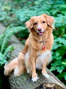 Maria's dog, Penny.